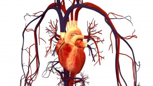 Blood Pressure and Sexual Exhaustion